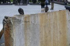 Amsterdam-184-Steen-met-duiven-voor-Rembrantdmonument