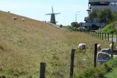 Vlissingen-Windmolen-oud-06