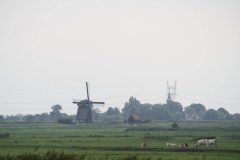 Schermer-Landschap-met-windmolen-en-koeien-1