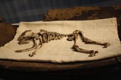 Groninger Museum 240 Skelet van zuigeling 5de eeuw
