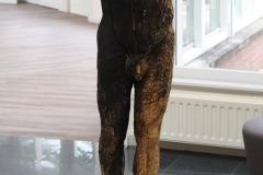 Artwalk-Hornerheide-330-Pascal-Vanderhoven-De-gehavende-mens