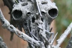 Agenore-Fabbri-1957-Groot-Insect-4-detail