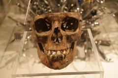 Skelet-Schedel